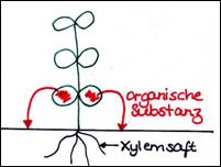 download Mikrobiologisches Praktikum fur Naturwissenschaftler